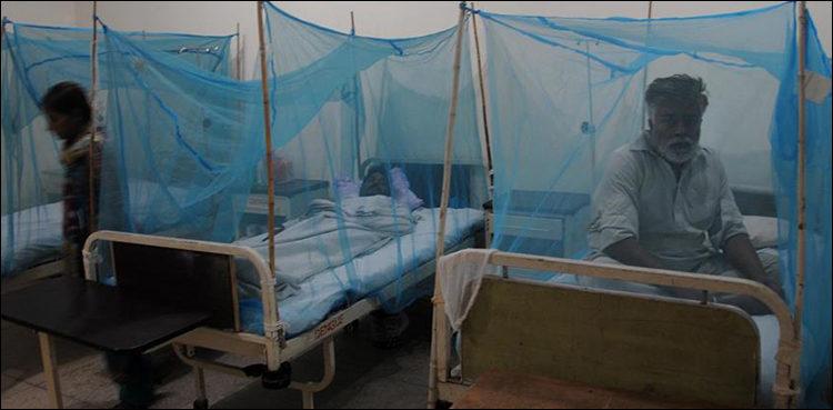 dengue in KP