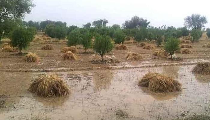 crop destroyed in pakistan