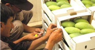 Pakistan mango export